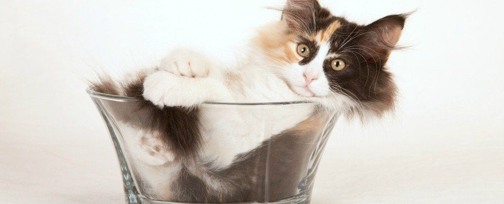 إذا كانت القطط تأخذ شكل الإناء الذي توضع فيه فهل نعتبرها من السوائل؟