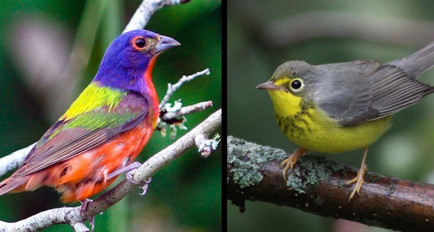 تموت ملايين الطيور في حوادث التصادم كل عام، لكن الأضواء قد تغيّر ذلك