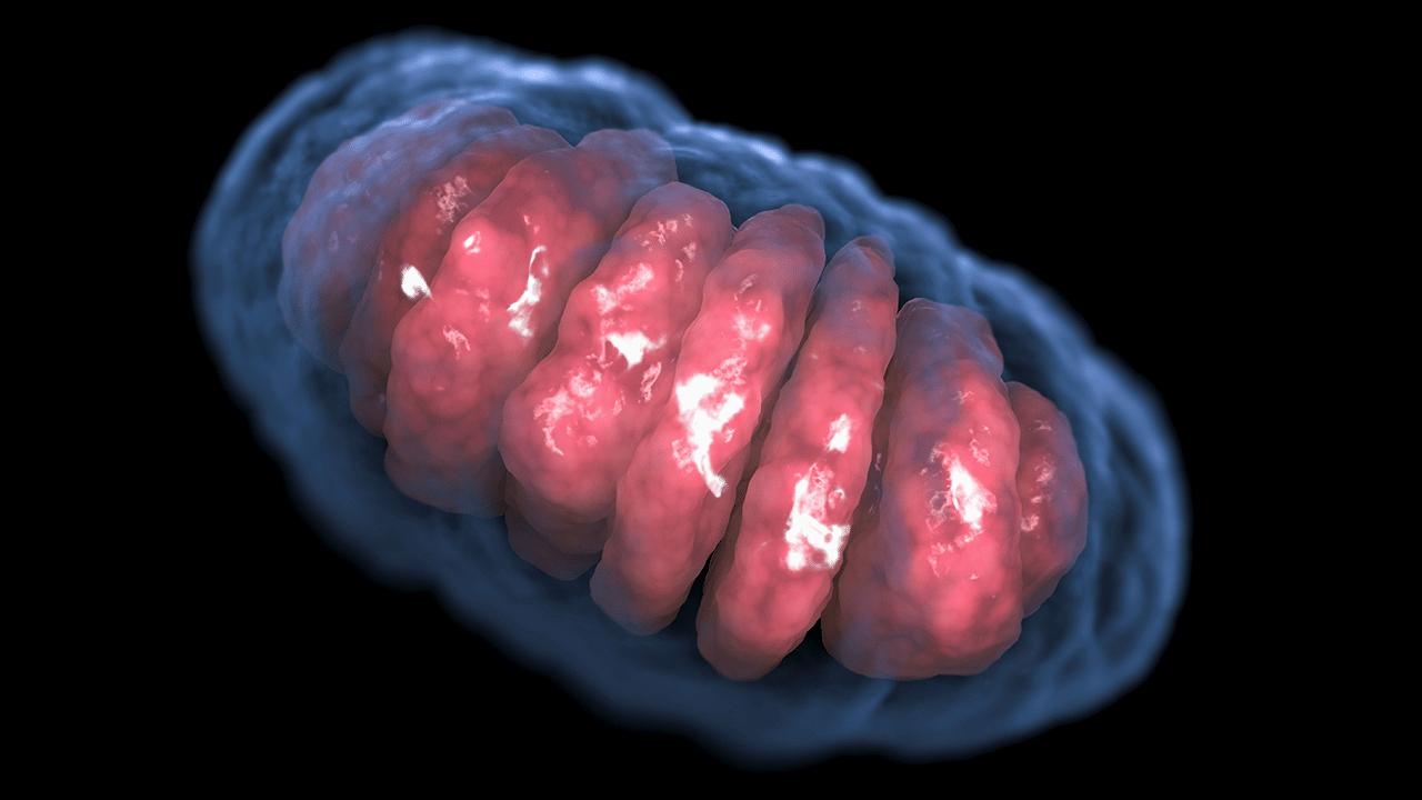 اكتشاف ما لم يكن في الحسبان خلايا حقيقية النواة بدون ميتوكوندريا !