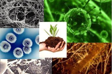 خدمات توصيل الطعام التي تقدمها البكتريا الأرضية للنباتات - تؤمن النباتات متطلباتها مما تنتجه البكتريا التي تنمو على جذورها
