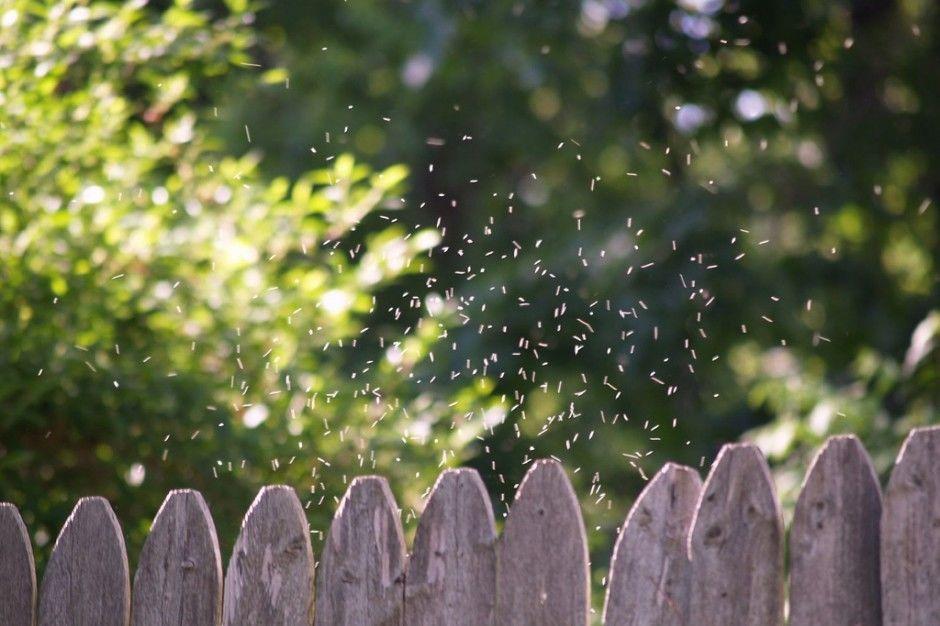 لماذا يطير الناموس ضمن سرب ؟