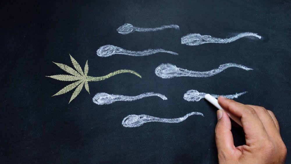 هل يزيد تدخين الماريجوانا (القنب الهندي) من كمية الحيوانات المنوية ؟
