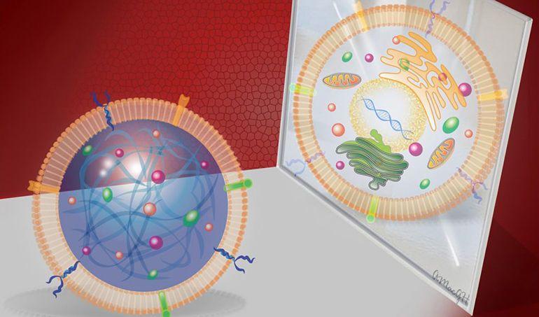 تطور جديد في مجال الخلايا الاصطناعية artificial cells استشعار التغيرات في الجسم والاستجابة للتغيرات الكيميائية خلايا اصطناعية بدائية