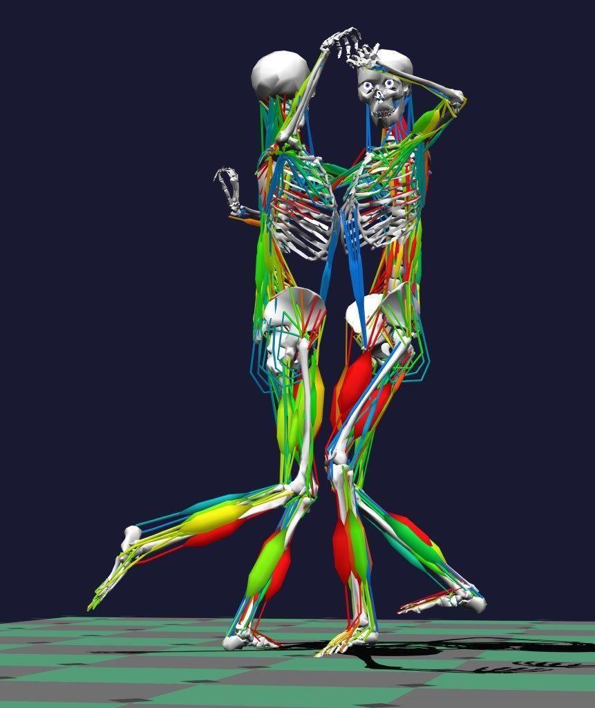 الديناميكا العضلية الأنظمة الحيوية