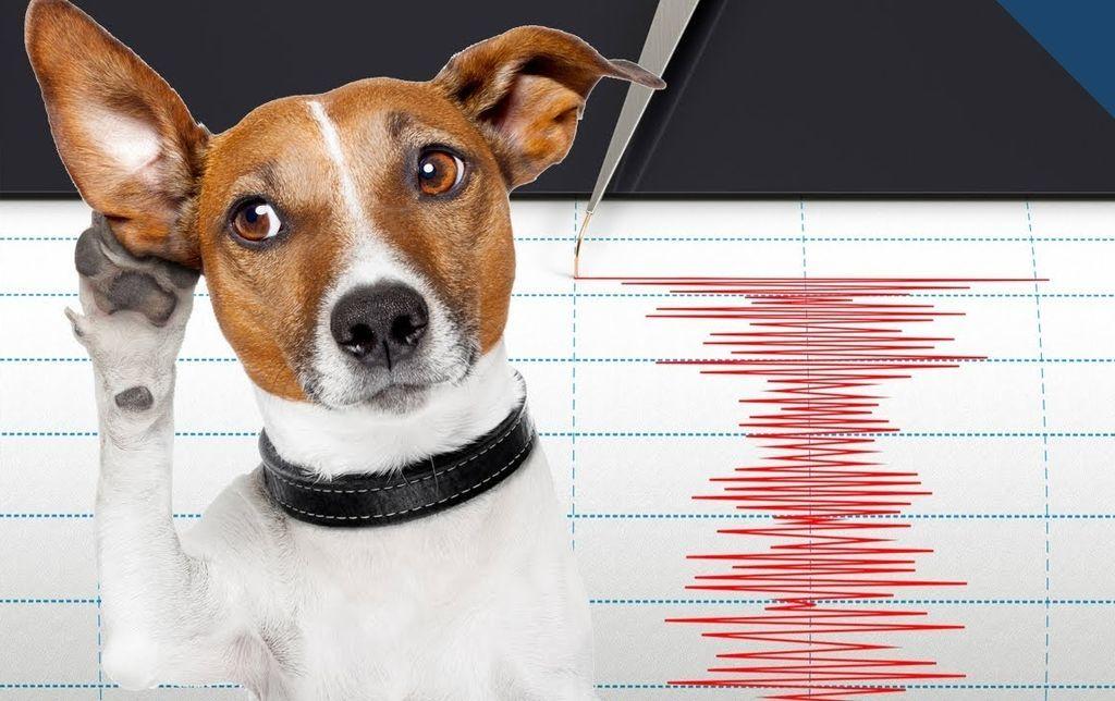 هل يمكن للحيوانات التنبؤ بالزلازل والكوارث الطبيعية؟