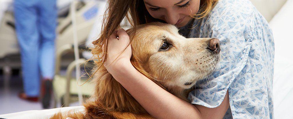 هل حقًا تستمتع الكلاب بجعلنا نشعر بحال أفضل؟ هذا ما يقوله العلم