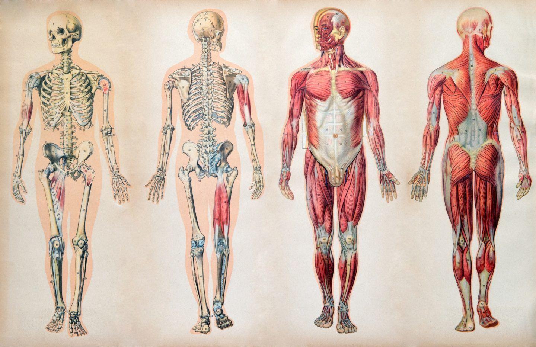 إحدى عشرة حقيقة علمية تم اكتشافها مؤخرًا عن جسدك