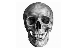 تم العثور على النسبة الذهبية ضمن جمجمة الإنسان، فماذا يعني ذلك مقارنة جمجمة الإنسان بجماجم الحيوانات الأخرى الأعداد السحرية في المجال الطبي