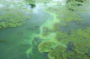 ما هي الطحالب الطحالب الخضراء الكائنات المائية التمثيل الضوئي التركيب الضوئي إنتاج الأكسجين الحصول على الطاقة الضوئية من الشمس لتوليد الكربوهيدرات
