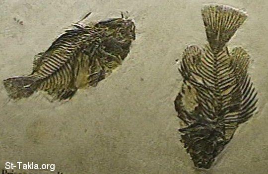 وجد الباحثون ما يبدو و كانه اقدم دليل معروف على حياة النباتات على الارض
