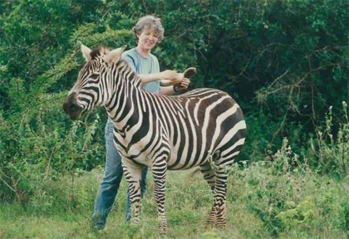 أليسون كوب في أفريقيا عام ١٩٩١